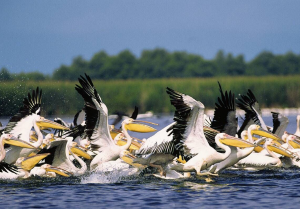 Manual online despre Delta Dunarii