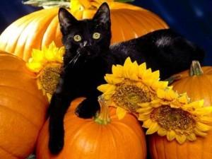 Traditii de Halloween pe glob