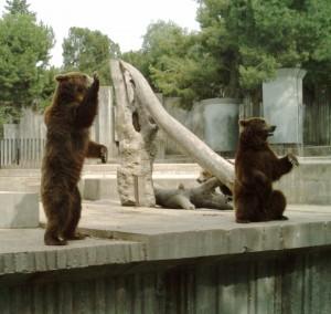 Hai la Zoo la Brasov