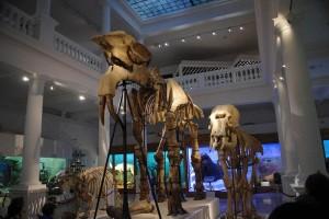 O zi la Muzeul Grigore Antipa