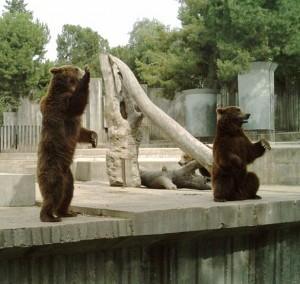 Cele mai frumoase Gradini Zoologice din Romania